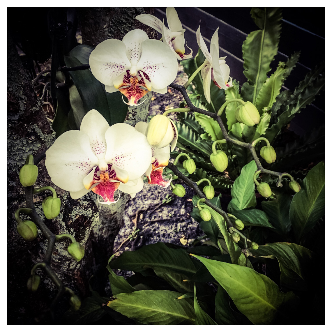 IphoneographyBotanical_002